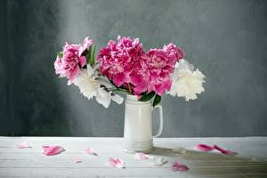Pictures Peony Vase White Pink color Petals Flowers