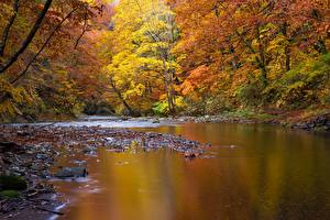 Pictures River Stone Autumn Landscape photography Trees Nature