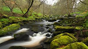 Fotos Stein England Laubmoose Bach Yorkshire Natur