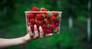 Bilder Erdbeeren Unscharfer Hintergrund Schachtel Hand das Essen