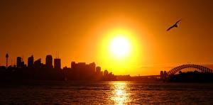 Fotos & Bilder Sonnenaufgänge und Sonnenuntergänge Australien Vögel Möwen Sydney Sonne Silhouette Städte