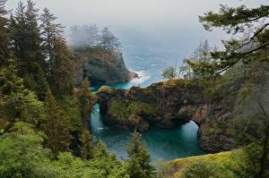 Bilder Vereinigte Staaten Küste Felsen Bäume Nebel Natur