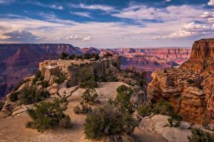 Bilder USA Grand Canyon Park Park Felsen Bäume Canyons Wolke Arizona Natur