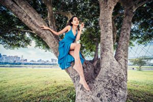 Pictures Asiatic Trees Sitting Dress Legs Posing female