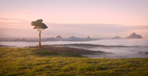 Picture Australia Coast Trees Fog Maleny Nature