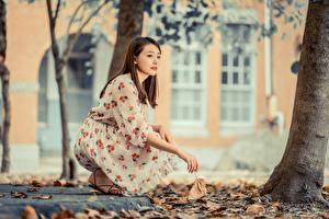 Hintergrundbilder Herbst Asiaten Blattwerk Unscharfer Hintergrund Braune Haare Kleid junge frau