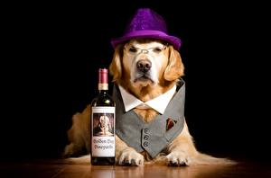 Pictures Dog Hat Glasses Glance Paws Bottle Funny Labrador Retriever animal