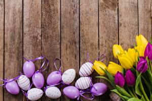 Image Easter Tulips Egg Wood planks flower