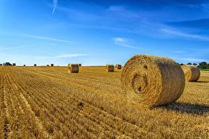 桌面壁纸,,田地,天空,乾草,