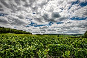 Bilder Frankreich Acker Himmel Weinberg Wolke Strauch Dormans