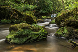 Images Germany Forest Stone Moss Streams  Nature