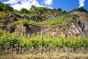 Hintergrundbilder Deutschland Weinberg Felsen Strauch Moselle Natur
