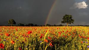 Bilder Grünland Mohn Regenbogen Gewitterwolke Natur