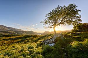 Pictures Ireland Mountains Park Stone Trees Sun Grass Killarney National Park Nature