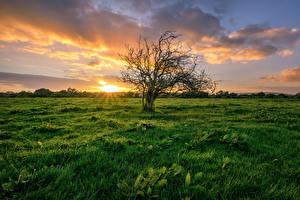 Bilder Irland Sonnenaufgänge und Sonnenuntergänge Grünland Gras Bäume Wolke Donegal