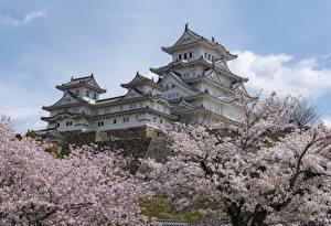 Hintergrundbilder Japan Burg Frühling Blühende Bäume Himeji Castle Städte