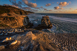 Hintergrundbilder Neuseeland Küste Vögel Stein Felsen Muriwai Regional Park Natur