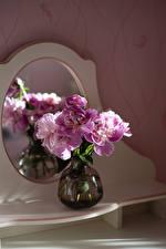 Pictures Peony Vase flower