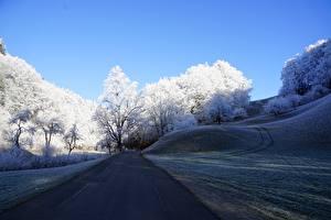 Bureaubladachtergronden Weg Een boom Gras Heuvels Rijp of rijm Natuur