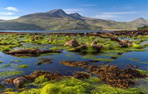 Image Scotland Mountains Island Stone Isle of Mull Nature