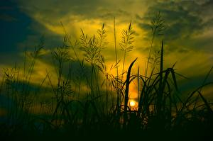 Picture Sunrise and sunset Grass Silhouette Nature