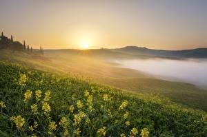 Fotos Sonnenaufgänge und Sonnenuntergänge Grünland Landschaftsfotografie Gras Hügel Nebel