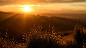 Images Sunrises and sunsets Rays of light Grass Bokeh