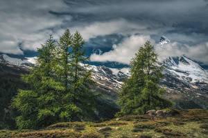 Fotos Schweiz Berg Himmel Alpen Fichten Wolke HDR Zermatt