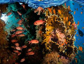 Fonds d'écran Monde sous-marin Corail Poisson Animaux