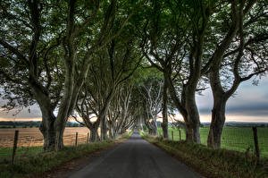 Pictures United Kingdom Roads Fields Trees HDR Northern Ireland, Dark Hedges