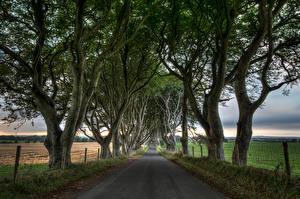 Fotos Vereinigtes Königreich Wege Felder Bäume HDR Northern Ireland, Dark Hedges Natur