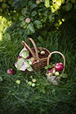 Bilder Äpfel Gras Weidenkorb Lebensmittel