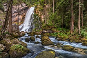 Wallpaper Austria Forests Waterfalls Stones Trees Moss Streams Gollinger Wasserfall Nature