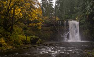 Image Autumn USA Waterfalls Rivers Trees Oregon, Silver Falls State Park, Upper North Falls, Silver Creek Nature