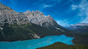 Pictures Canada Mountains Lake Park Banff Peyto Lake, Alberta Nature
