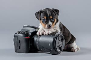 Images Dogs Puppies Camera Gray background  animal