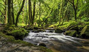 Fotos England Wälder Flusse Stein Bäume Laubmoose Cornwall