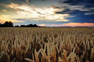 Bilder Felder Weizen Himmel Spitze Horizont