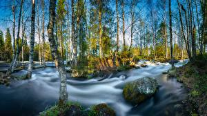Pictures Finland Rivers Stone Parks Trees Birch River Kitkajoki, Oulanka National Park Nature