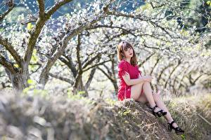 Bakgrundsbilder på skrivbordet Blommande träd Asiater Bokeh Brunhårig tjej Sitter Klänning Ben Dam klackar Unga_kvinnor