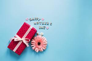 Fotos Gerbera Muttertag Geschenke Farbigen hintergrund Blumen