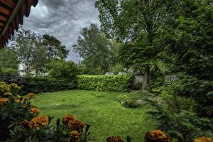 Desktop wallpapers Germany Berlin Park Tagetes Lawn Bush Trees Nature