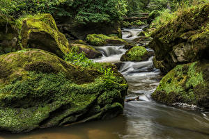 Pictures Germany Forests Stones Streams Moss South Eifel Nature