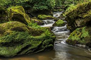 Fotos Deutschland Wälder Steine Bäche Laubmoose South Eifel