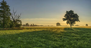 壁纸、ドイツ、朝焼けと日没、畑、バイエルン州、木、草、霧、Augsburg、自然、