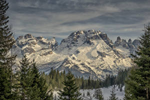 Bilder Italien Gebirge Alpen Schnee Fichten Cima Brenta