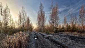 Fotos Morgen Wege Reif niederschlag Bäume