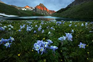 Pictures Mountain Lake Meadow Scenery Violet Aquilegia Flowers Nature