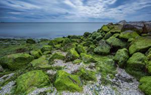 Pictures Netherlands Coast Stones seaweed