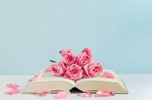 Fotos Rose Bücher Rosa Farbe Blüte